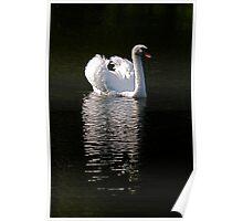 Mr Swan Poster