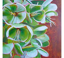 Hellebore, acrylic on canvas Photographic Print