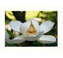 Southern Magnolia Art Print