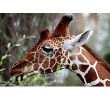 Out of Africa - Giraffe Profile Photographic Print