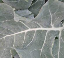 Okeechobee Farms - Broccoli Leaf by Eat  Real Food