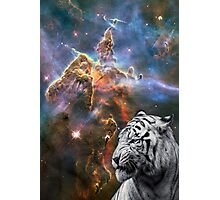 What Tigers Dream of Photographic Print