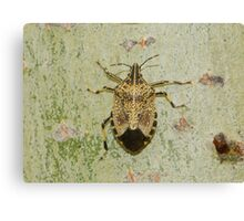 disabled bug  created pattren Canvas Print