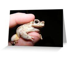 Arizona Desert Toad Greeting Card