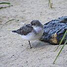 Beach Bird by Jonathon Wuehler