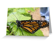 Morning Monarch Greeting Card