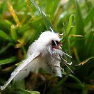 White Moth in the Dew by Jonathon Wuehler