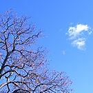 Dead Tree Reaches by Jonathon Wuehler