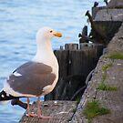 Posing Seagull by Jonathon Wuehler