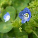 Microscopic Bloom by Jonathon Wuehler