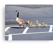 The Goose Lead Canvas Print