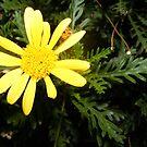 Yellow Blossom by Jonathon Wuehler