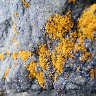 Orange Lichen by Jonathon Wuehler