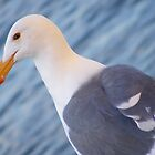 Seagull Stare by Jonathon Wuehler