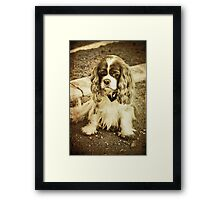 What about me??? Framed Print