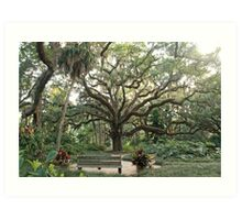 Washington Oaks Art Print