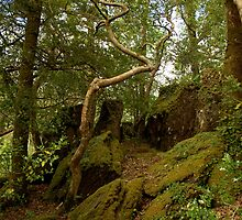 Wildwood - Glengarriff Woods Nature Reserve by CliveOnBeara