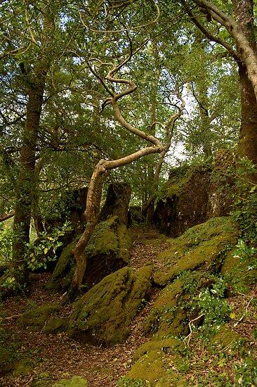 Wildwood - Glengarriff Woods Nature Reserve by CliveOnBeara