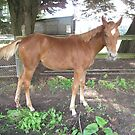 Miss Frosty aged 5 months by skyhorse