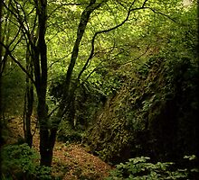 Forty shades of green - Glengarriff Woods Nature Reserve by CliveOnBeara