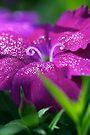 Magic in the Garden by Renee Hubbard Fine Art Photography