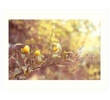 Branch of kumquats in spring garden Art Print