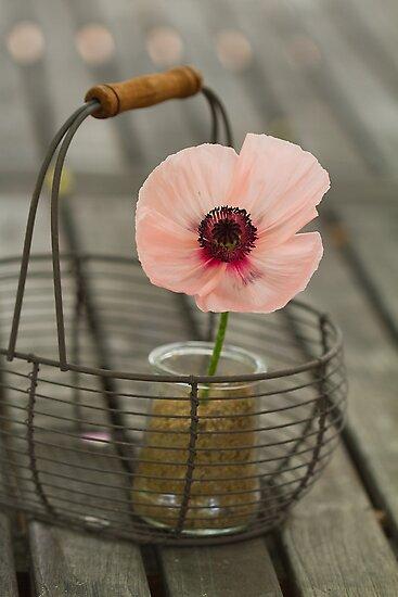 basket of poppy by Carine LUTT