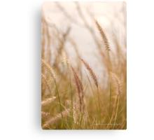 Simply Grass © Vicki Ferrari Photography Canvas Print