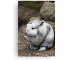 rabbit in the forest Canvas Print