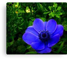 Hidden Blue Canvas Print