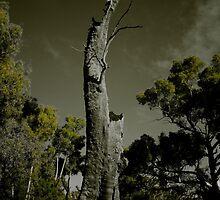 Haunted by Penny Kittel