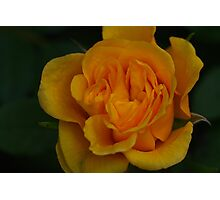 Heart of the Yellow Rose Photographic Print