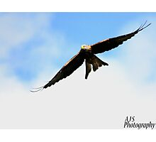 Swooping Red Kite Photographic Print