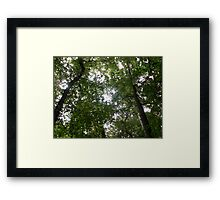 The Tree Network Framed Print