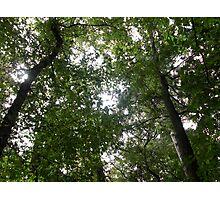 The Tree Network Photographic Print