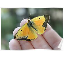Fly away yellow butterfly Poster