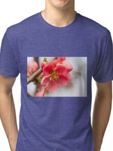 pink flowers in bloom on tree Tri-blend T-Shirt
