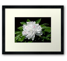 A pinch of pink © Framed Print