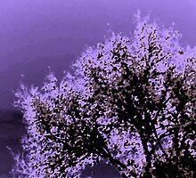 Trees in November by Lenore Senior