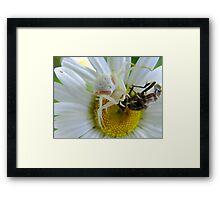 Lunch Anyone? Framed Print