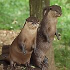 Asian Small-clawed Otters by Magic-Moments