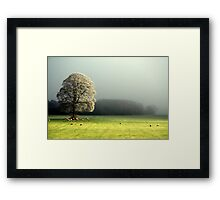 """LIGHT THROUGH THE MIST"" Framed Print"