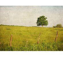 The Tree in The Pasture Photographic Print