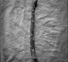 Asparagus Spear by synergymono