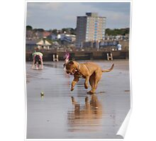 Dog play  Poster
