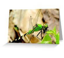 Hungry Little Dragonfly Greeting Card
