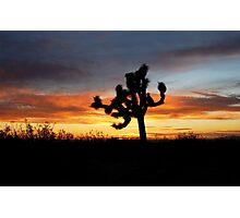 Beautiful sunrise with one lone Joshua tree Photographic Print