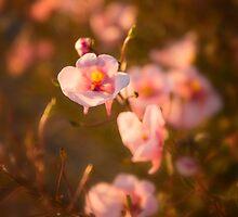 Pink Flowers by KellyHeaton