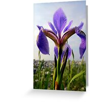 Ocean Blue Daffodil Greeting Card