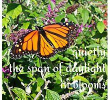 monarch bloom Photographic Print